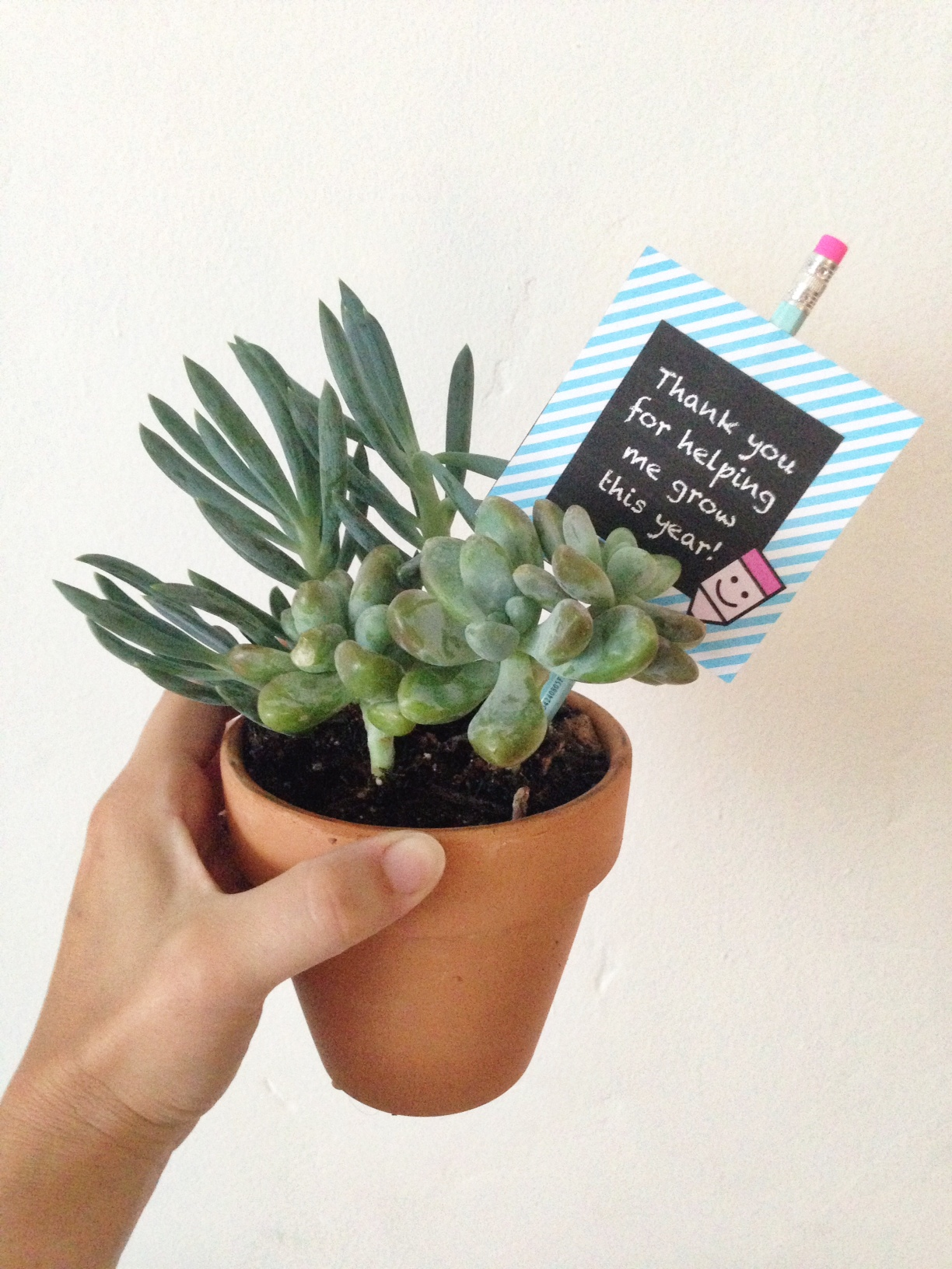 preschool teacher gift idea | Oh Lovely Day