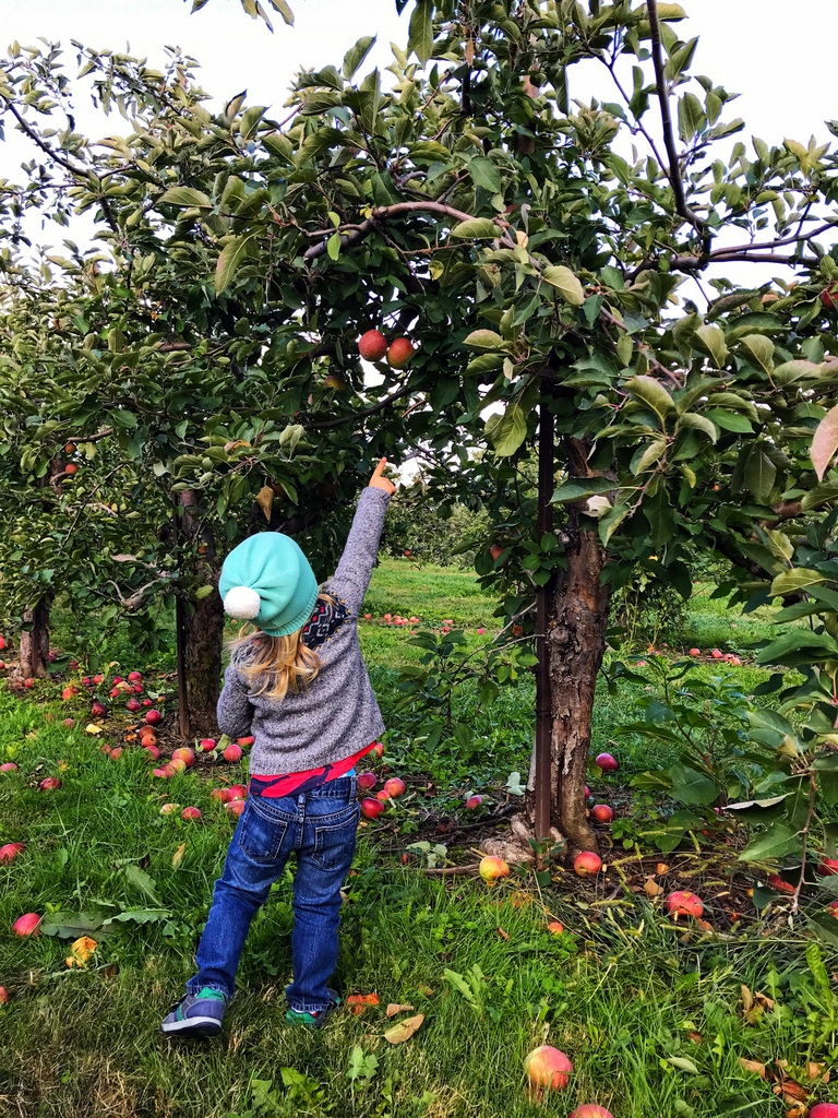 Fall fun and apple picking at Lynd Fruit Farm in Columbus, Ohio